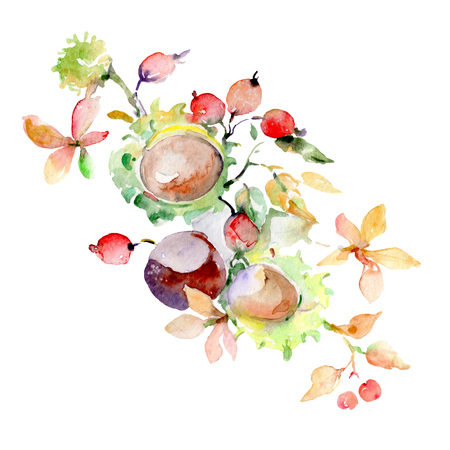 Bouquet of autumn forest fruits. Wild spring leaf isolated. Watercolor background illustration set. Watercolour drawing fashion aquarelle. Isolated bouquet illustration element.