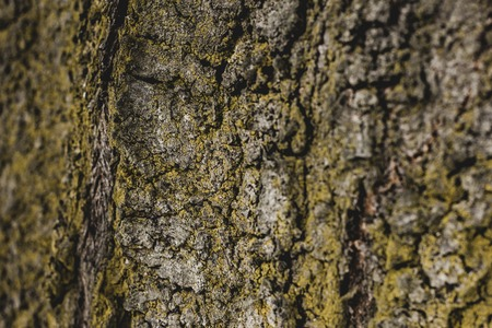 close up of textured tree bark covered with moss Stock Photo