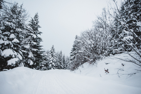 road in carpathian mountains covered with snow among spruces Imagens