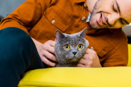 casual cheerful man with british shorthair cat at home Standard-Bild - 118650389