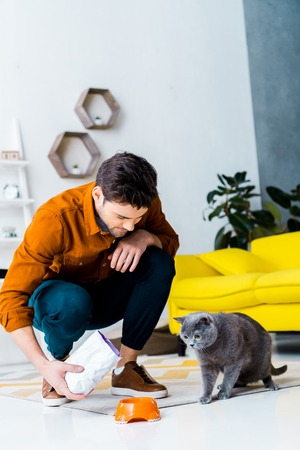 handsome man feeding grey british shorthair cat in living room Stok Fotoğraf