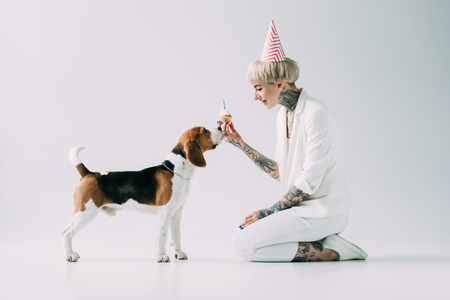 happy blonde woman holding cupcake while sitting near beagle dog on grey background Stock fotó