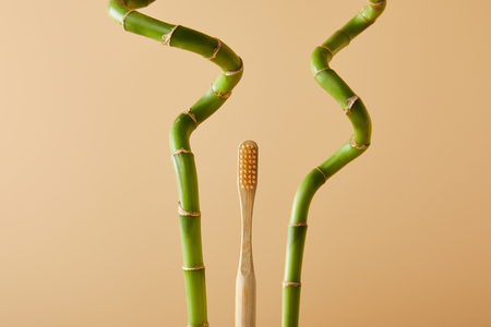 bamboo toothbrush and green bamboo stems on beige background 스톡 콘텐츠