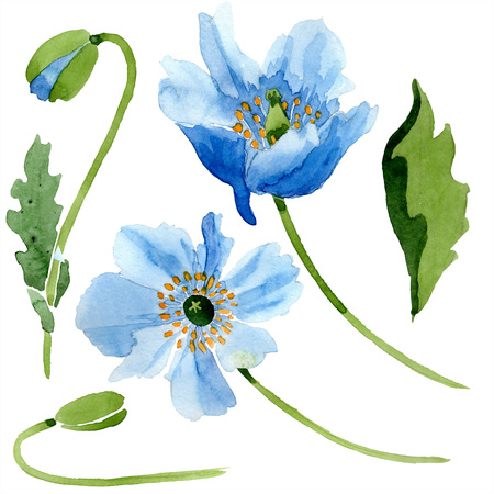 Blue poppy floral botanical flower. Wild spring leaf wildflower isolated. Watercolor background illustration set. Watercolour drawing fashion aquarelle isolated. Isolated poppies illustration element. Reklamní fotografie