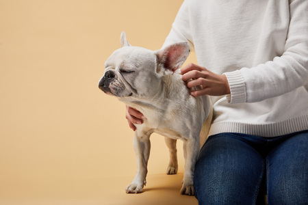 cropped view of woman caressing french bulldog with closed eyes on beige background