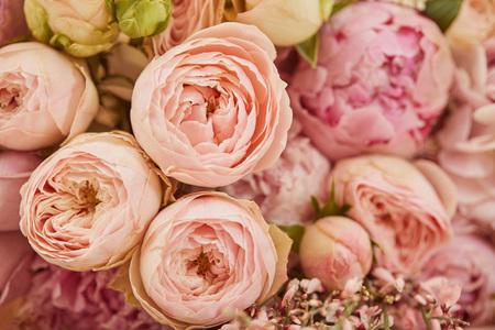 Cerca del ramo de peonías rosas