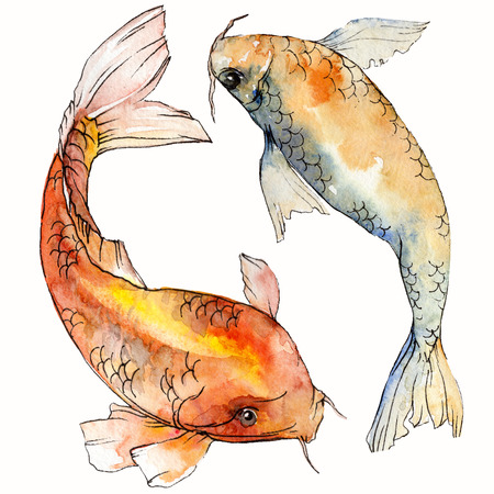 Watercolor aquatic underwater colorful tropical fish set. Red sea and exotic fishes inside: Goldfish. Aquarelle elements for background, texture. Isolated goldenfish illustration element. Banco de Imagens