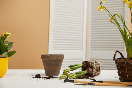 clay flowerpot with hyacinth in dirt on white table