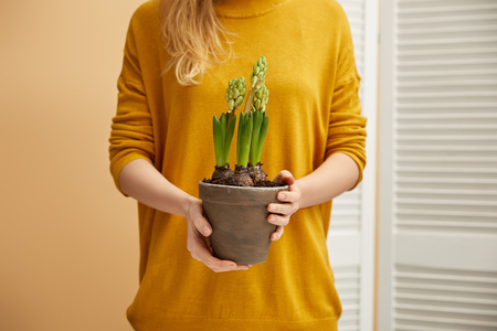 cropped view of woman in yellow sweater holding hyacinth