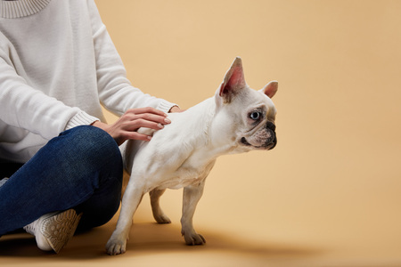 cropped view of woman sitting near french bulldog on beige background