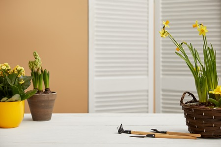 daffodils, yellow flowers and hyacinth on white table 스톡 콘텐츠