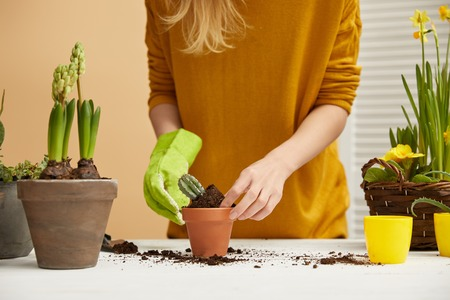 partial view of gardener in yellow sweater planting cactus in flowerpot