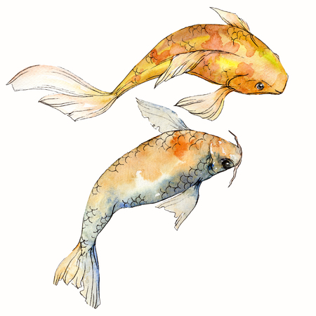 Watercolor aquatic underwater colorful tropical fish set. Red sea and exotic fishes inside: Goldfish. Aquarelle elements for background, texture. Isolated goldenfish illustration element. 스톡 콘텐츠