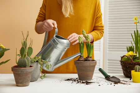 partial view of gardener in yellow sweater watering hyacinth in clay flowerpot