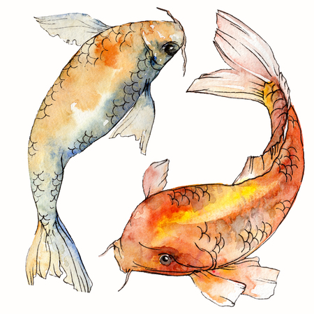 Watercolor aquatic underwater colorful tropical fish set. Red sea and exotic fishes inside: Goldfish. Aquarelle elements for background, texture. Isolated goldenfish illustration element. Imagens