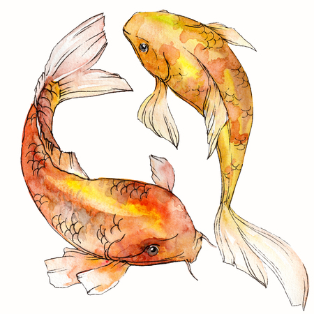 Watercolor aquatic underwater colorful tropical fish set. Red sea and exotic fishes inside: Goldfish. Aquarelle elements for background, texture. Isolated goldenfish illustration element. 版權商用圖片