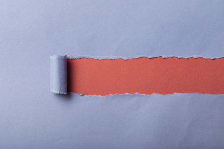 torn blue paper with rolled edge on pink background