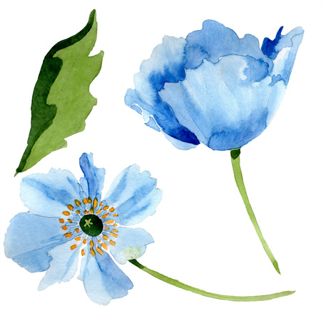 Blue poppy floral botanical flower. Wild spring leaf wildflower isolated. Watercolor background illustration set. Watercolour drawing fashion aquarelle isolated. Isolated poppies illustration element. Stok Fotoğraf