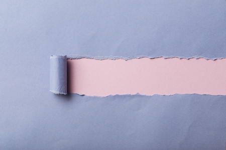 ripped blue paper with rolled edge on pink background Stock Photo