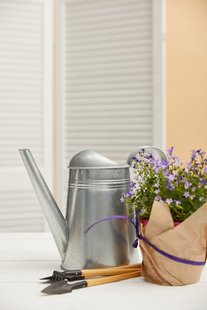 purple flowers in flowerpot with paper, watering can, tools Фото со стока