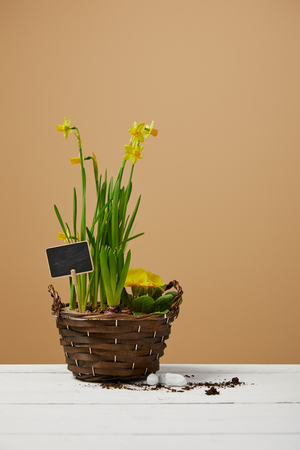 yellow daffodils in braided flowerpot on white table