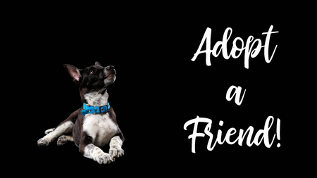 dark mongrel dog in blue collar and lettering adopt a friend isolated on black