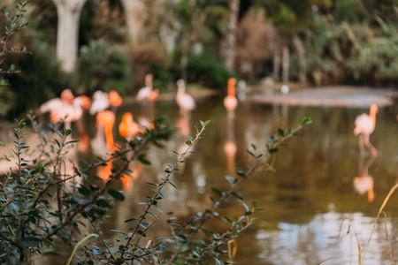 selective focus of green plant on blurred background with pink flamingos, barcelona, spain