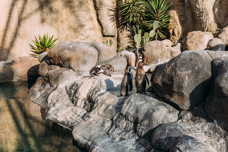 pinguins on rocks on sunlight in zoological park, barcelona, spain