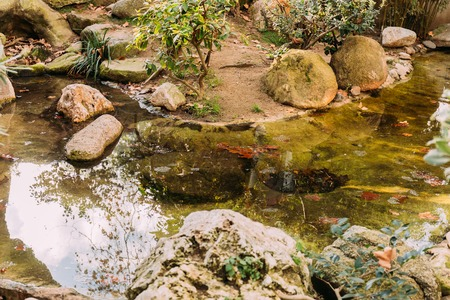 pond surrounded by green plants in zoological park, barcelona, spain