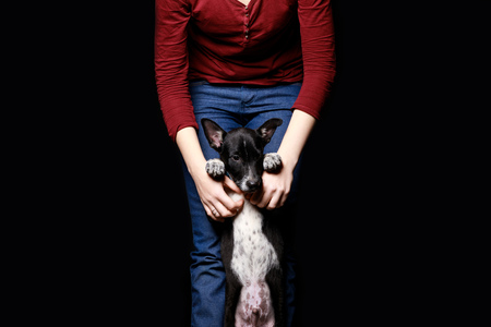 cropped view of woman with mongrel dog on hind legs isolated on black Stock Photo