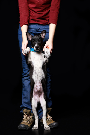 cropped view of woman with dark dog on hind legs isolated on black