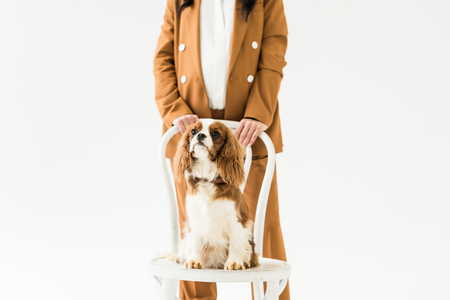 Cropped view of pregnant woman in brown suit standing near dog on chair isolated on white