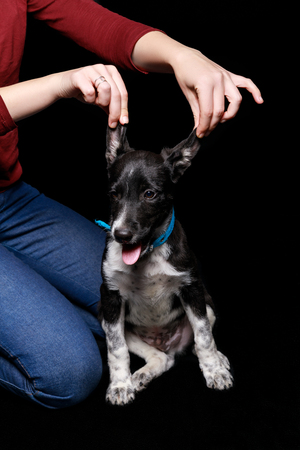 cropped view of woman in red sweater and jeans sitting near mongrel dog and  touching ears isolated on black Stock Photo