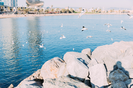 coast rocks and calm sea with seagulls flying over water, barcelona, spain
