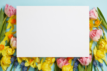 top view of empty white blank surrounded by pink tulips, yellow daffodils and blue hyacinths  on blue background