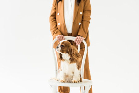 Cropped view of pregnant woman in brown suit standing near cute dog isolated on white