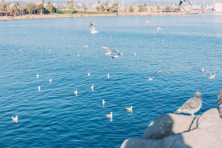 coast view with birds flying over blue sea, barcelona, spain