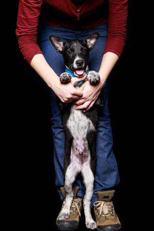 cropped view of woman in jeans with dog in collar on hind legs isolated on black Stock Photo