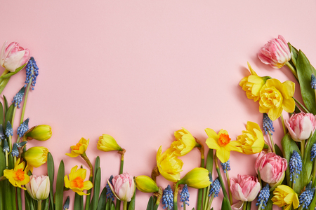top view of beautiful pink tulips, blue hyacinths and yellow daffodils on pink background