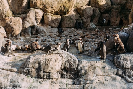 group of pinguins on rocks in zoological park, barcelona, spain