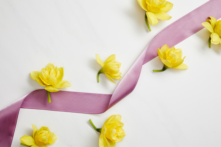 top view of yellow narcissus flowers and violet satin ribbon on white