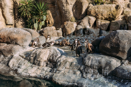 group of pinguins lazing on rocks in zoo, barcelona, spain Stock Photo