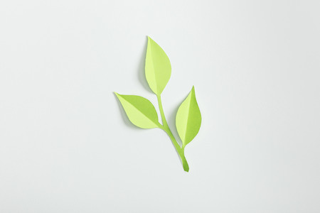 top view of green paper plant on grey background