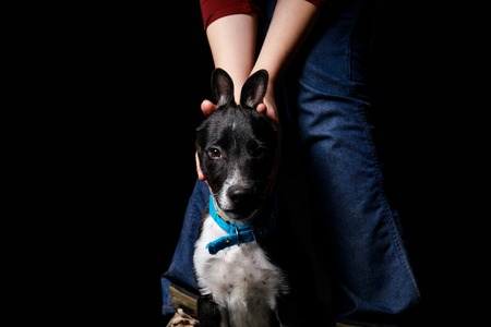 cropped view of woman in jeans playing with mongrel dog in blue collar isolated on black