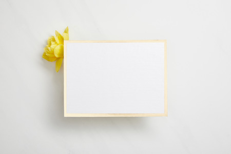 top view of white empty card with yellow narcissus flower on white background