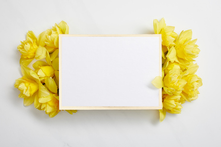 top view of white empty card with yellow narcissus flowers on white background 版權商用圖片