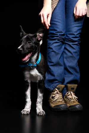 cropped view of woman in jeans with cute mongrel dog isolated on black