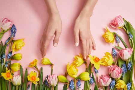 partial view of female hands, fresh pink tulips, blue hyacinths and yellow daffodils on pink