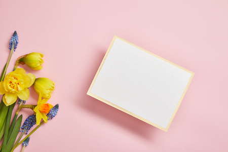 top view of white empty card, blue hyacinths and yellow daffodils on pink background Stockfoto