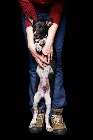 cropped view of woman in jeans with mongrel dog in collar on hind legs isolated on black
